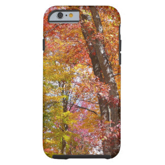 Orange and Yellow Fall Trees Autumn Photography Tough iPhone 6 Case