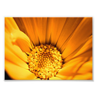 Orange and yellow gerbera daisy photo art