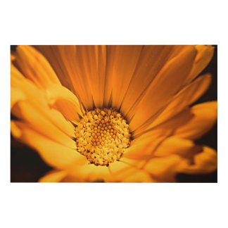 Orange and yellow gerbera daisy wood print