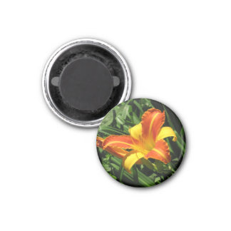 Orange and Yellow Lily Magnet
