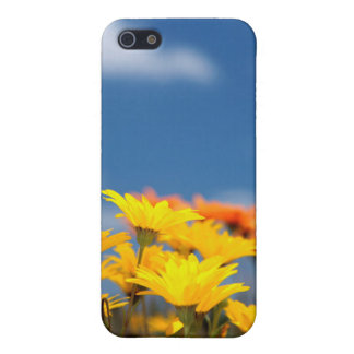 Orange And Yellow Namaqualand Daisies iPhone 5 Cover