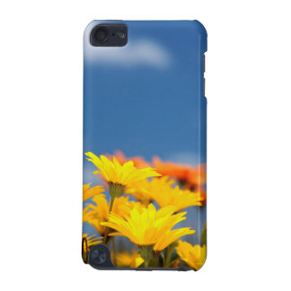 Orange And Yellow Namaqualand Daisies iPod Touch 5G Cases