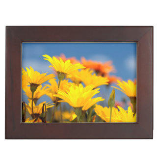Orange And Yellow Namaqualand Daisies Memory Boxes