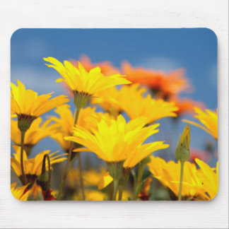 Orange And Yellow Namaqualand Daisies Mouse Pad