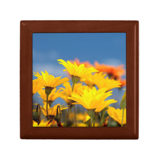 Orange And Yellow Namaqualand Daisies Small Square Gift Box