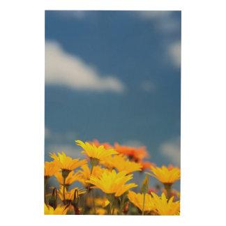 Orange And Yellow Namaqualand Daisies Wood Print