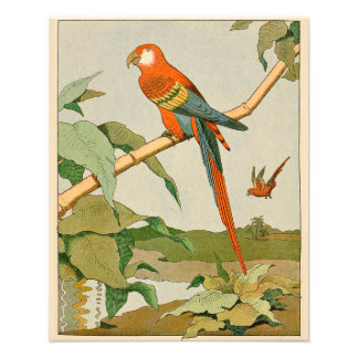 Orange and Yellow Parrot on Bamboo Photo Print