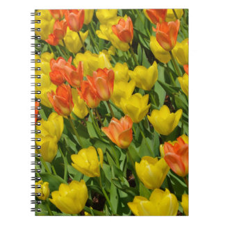 Orange and yellow spring tulips notebook