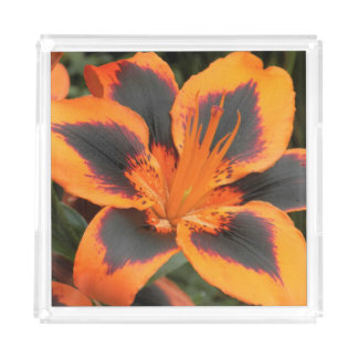 Orange Asiatic Lily Floral Acrylic Tray