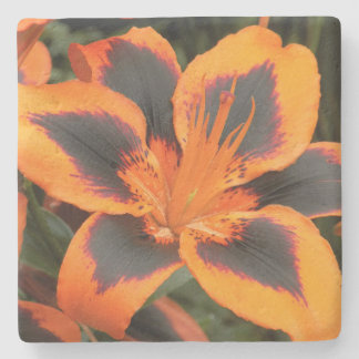 Orange Asiatic Lily Floral Stone Coaster