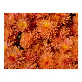 Orange autumn chrysanthemum flowers postcard