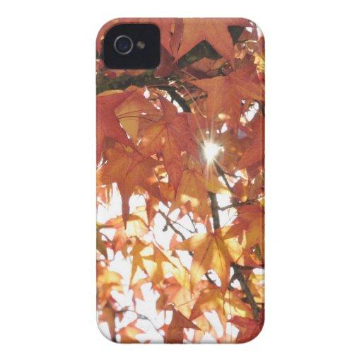 Orange autumn leafs with hard sun Case-Mate iPhone 4 case