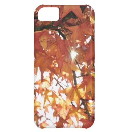 Orange autumn leafs with hard sun cover for iPhone 5C