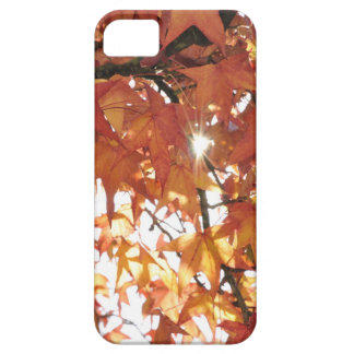 Orange autumn leafs with hard sun iPhone 5 cases