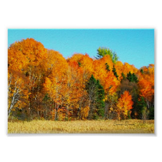 Orange Autumn Trees Newfoundland Canada Photo Art Poster