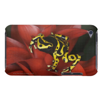 Orange banded dart frog  Dendrobates leucomelas Barely There iPod Cases