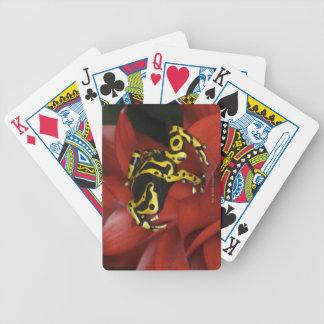 Orange banded dart frog  Dendrobates leucomelas Bicycle Playing Cards