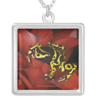 Orange banded dart frog  Dendrobates leucomelas Silver Plated Necklace