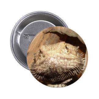 Orange Bearded Dragon 6 Cm Round Badge