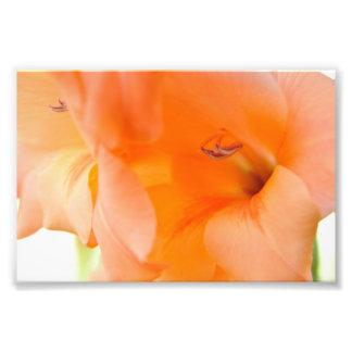 Orange Bell Flowers close-up photography digital Photo Print
