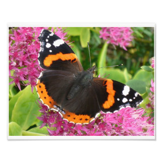 Orange Black and White Butterfly Poster Photo Print
