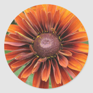 Orange Black Eyed Susan Classic Round Sticker