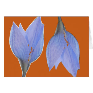 Orange & Blue Flower Notecard Greeting Card