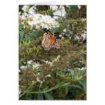 orange butterfly blank greeting card