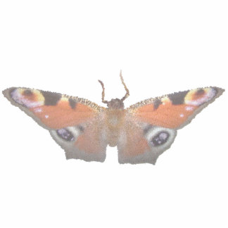 orange butterfly ( digital image ) acrylic cut outs