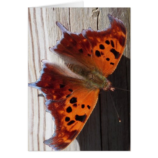 Orange Butterfly Note card