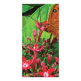 Orange Butterfly on Red Kalanchoe Photo Card