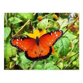Orange Butterfly Post Card