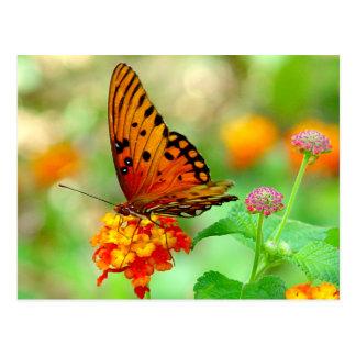 Orange Butterfly Postcard 2