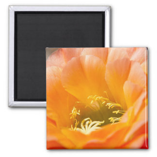 Orange Cacti Flower Magnet