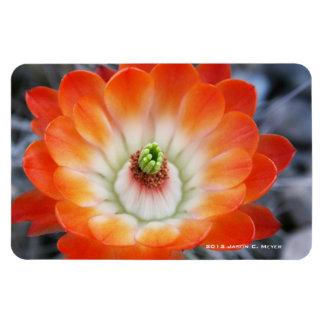 Orange Cacti Flower Rectangle Magnets
