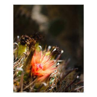 Orange Cactus Bloom Photographic Print