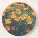 Orange California Poppy (Eschscholzia Californica) Drink Coasters