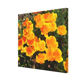 Orange California Poppy Flowers Gallery Wrapped Canvas