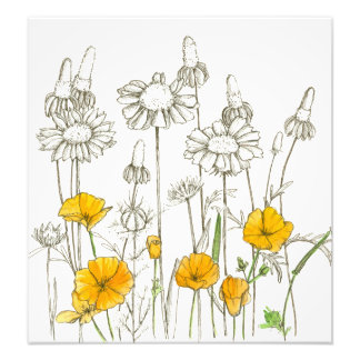 Orange California Poppy Flowers Plant Sketch Photo Print