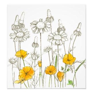 Orange California Poppy Flowers Plant Sketch Photo Print