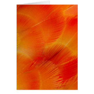Orange Camelot Macaw Feather Abstract Card