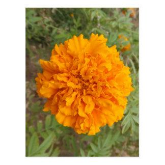 Orange Carnation postcard, customize Postcard