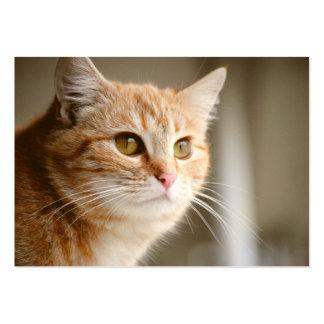 Orange Cat  Business Cards