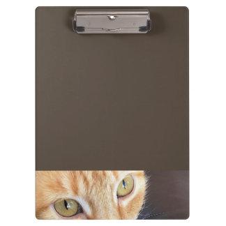 Orange cat closeup clipboard