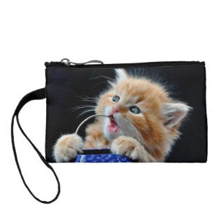 Orange Cat Cub Playing and Biting Blue Coin Purses