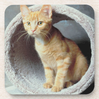 Orange Cat in Toy Drink Coasters