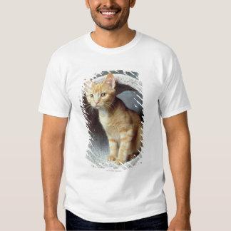 Orange Cat in Toy Shirt