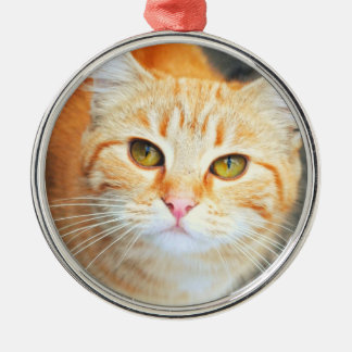 Orange Cat Ornament