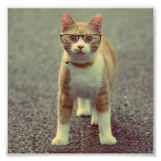 Orange cat with glasses photo print