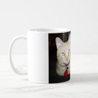 Orange Cat With Pumpkin Basic White Mug